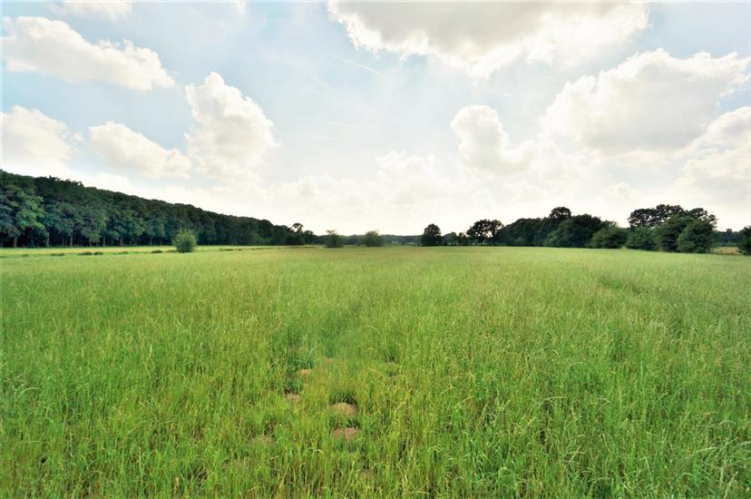 Land for sale in Diest